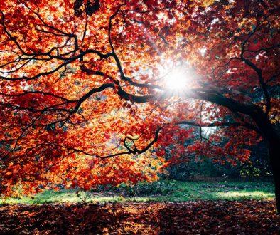 Herfst Tag