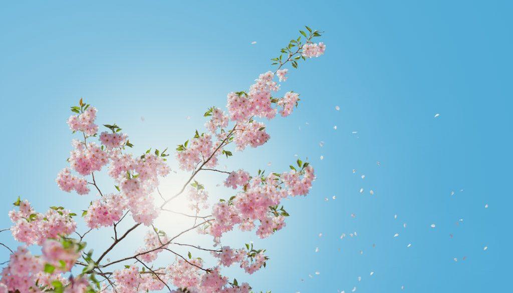 Lente Tag, 10 vragen over de lente